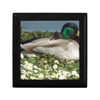 Male Mallard Duck Small Square Gift Box