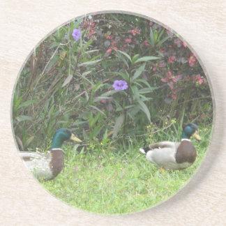 Male Mallard Ducks Coaster