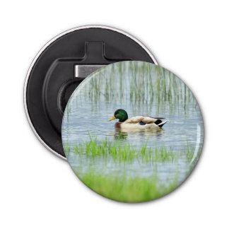 Male mallard or wild duck, anas platyrhynchos bottle opener