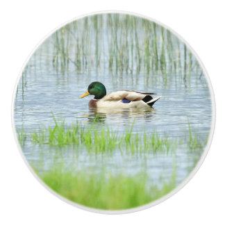 Male mallard or wild duck, anas platyrhynchos ceramic knob