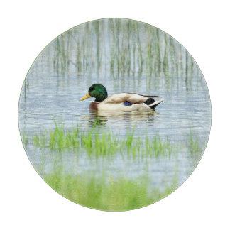 Male mallard or wild duck, anas platyrhynchos cutting board