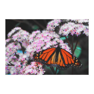 Male Monarch Butterfly Danaus Plexippus Canvas Prints
