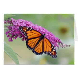 Male Monarch on Butterfly Bush Card