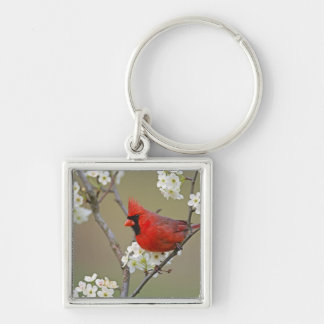 Male Northern Cardinal among pear tree Silver-Colored Square Key Ring