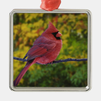 Male Northern Cardinal in autumn, Cardinalis Silver-Colored Square Decoration