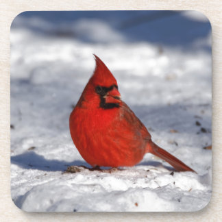 Male Northern Cardinal in the Snow Beverage Coasters