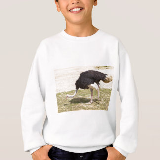 Male Ostrich walking Sweatshirt