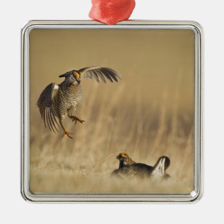 Male prairie chickens at lek in Loup County Christmas Tree Ornaments