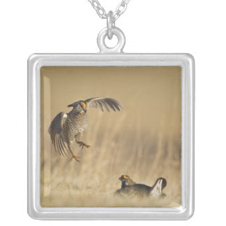 Male prairie chickens at lek in Loup County Square Pendant Necklace