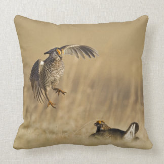 Male prairie chickens at lek in Loup County Throw Cushions