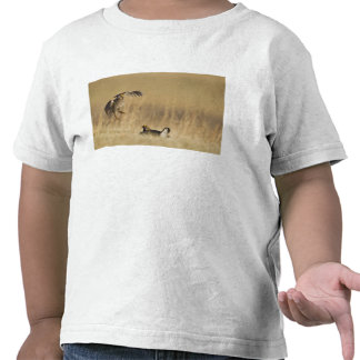 Male prairie chickens at lek in Loup County T-shirts