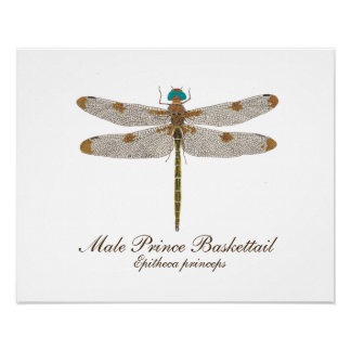 Male Prince Baskettail Dragonfly Art Poster