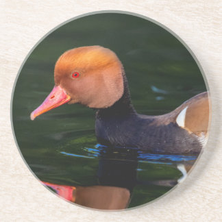 Male red-crested pochard, netta rufina, duck beverage coaster