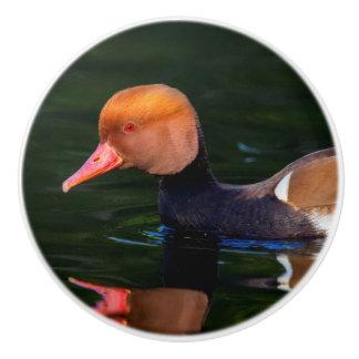 Male red-crested pochard, netta rufina, duck ceramic knob