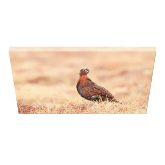 Male Red Grouse Canvas Print