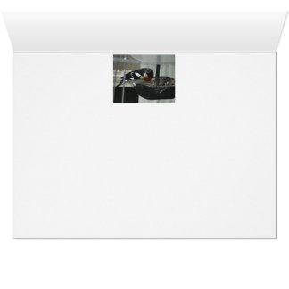Male Rosebreasted Grosbeak Card