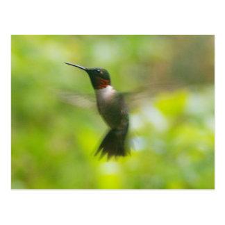 Male Ruby Throat Hummingbird postcard
