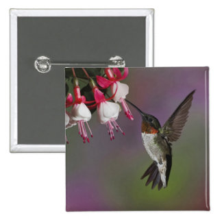 Male Ruby throated Hummingbird, Archilochus 15 Cm Square Badge