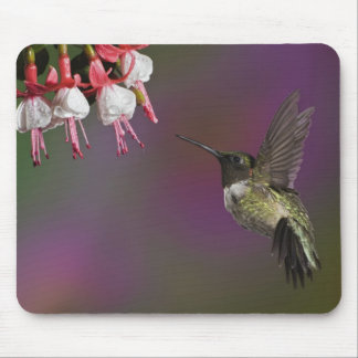 Male Ruby throated Hummingbird, Archilochus 2 Mouse Pad