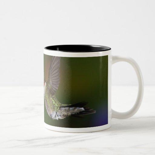 Male Ruby-throated Hummingbird feeding on Mug