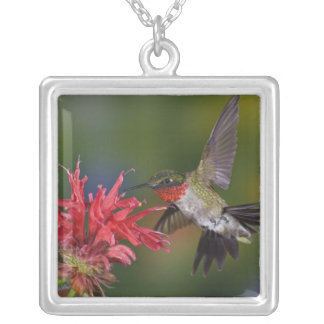 Male Ruby-throated Hummingbird feeding on Square Pendant Necklace