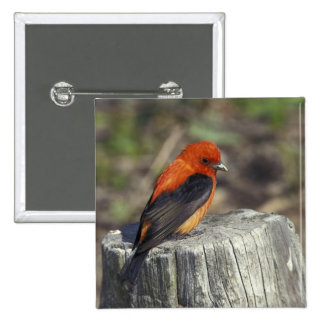 Male Scarlet Tanager in breeding plumage 15 Cm Square Badge