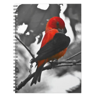 Male Scarlet Tanager Notebooks