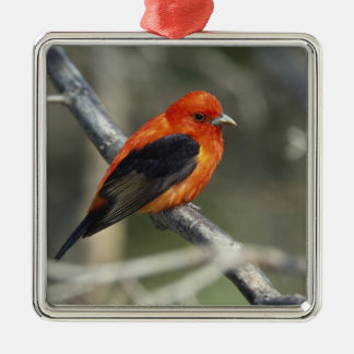 Male Scarlet Tanager, Piranga olivacea Metal Ornament