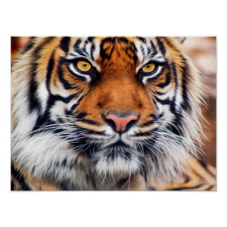 Male Siberian Tiger Paint Photograph Poster