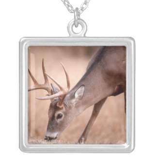 Male whitetail deer grazing silver plated necklace