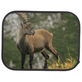Male wild alpine, capra ibex, or steinbock car mat