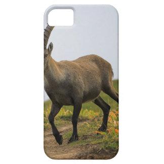 Male wild alpine, capra ibex, or steinbock case for the iPhone 5