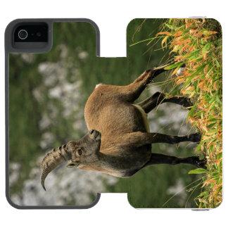 Male wild alpine, capra ibex, or steinbock incipio watson™ iPhone 5 wallet case