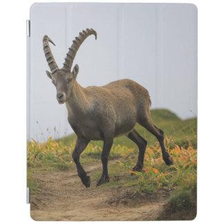 Male wild alpine, capra ibex, or steinbock iPad cover