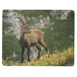Male wild alpine, capra ibex, or steinbock journal