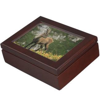 Male wild alpine, capra ibex, or steinbock keepsake box