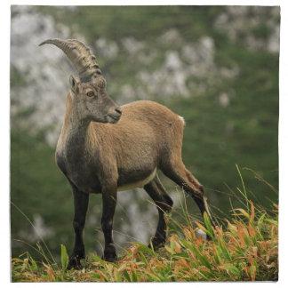 Male wild alpine, capra ibex, or steinbock napkin