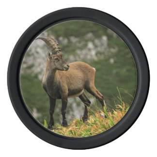 Male wild alpine, capra ibex, or steinbock poker chips