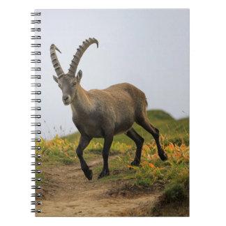 Male wild alpine, capra ibex, or steinbock spiral notebook