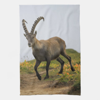 Male wild alpine, capra ibex, or steinbock tea towel