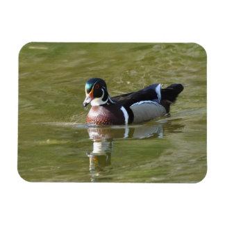 Male Wood Duck Magnet