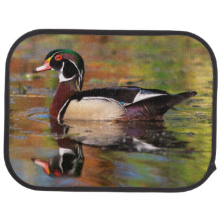 Male wood duck swims, California Car Mat