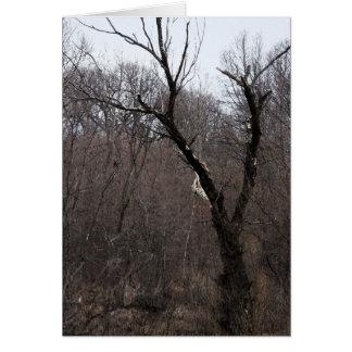 Malificent Tree Greeting Card