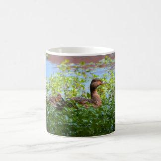 Mallard and Ducklings-Swimming by Shirley Taylor Coffee Mug