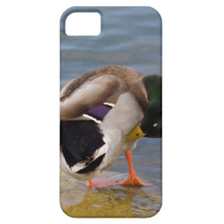 Mallard colors barely there iPhone 5 case