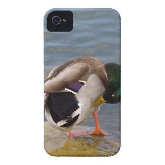 Mallard colors Case-Mate iPhone 4 cases