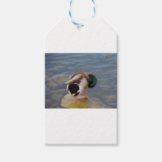 Mallard colors gift tags