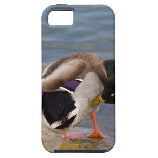Mallard colors tough iPhone 5 case