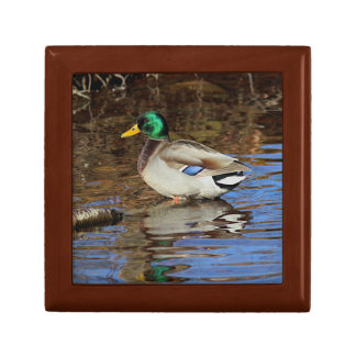 Mallard drake small square gift box