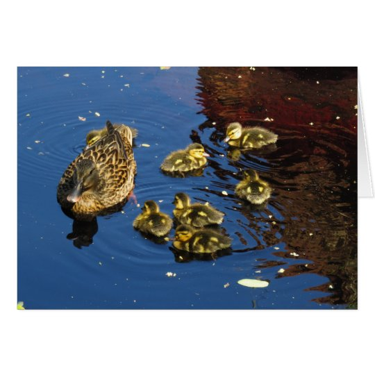 Mallard Duck and Ducklings Card